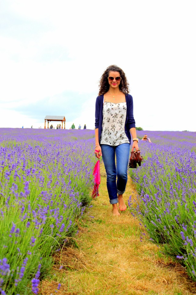 Mayfield Lavender Farm1