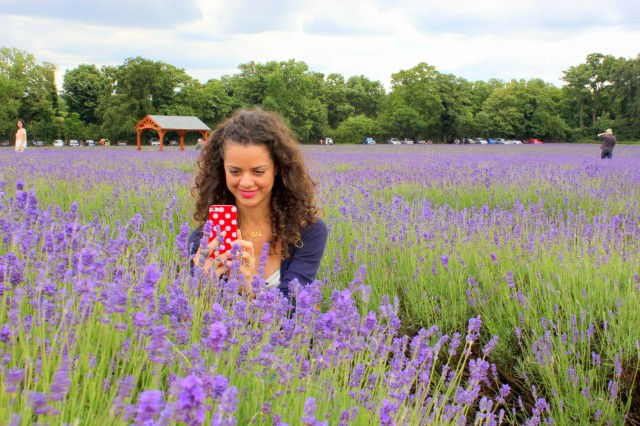 Mayfield Lavender Farm16