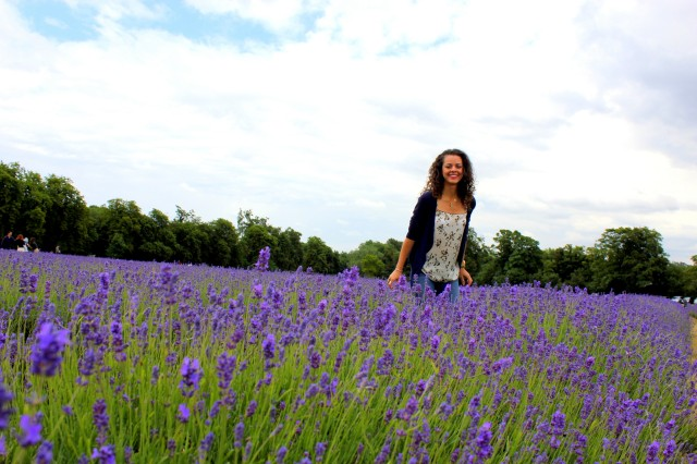 Mayfield Lavender Farm6